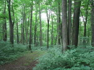 Warriors_Path_State_Park